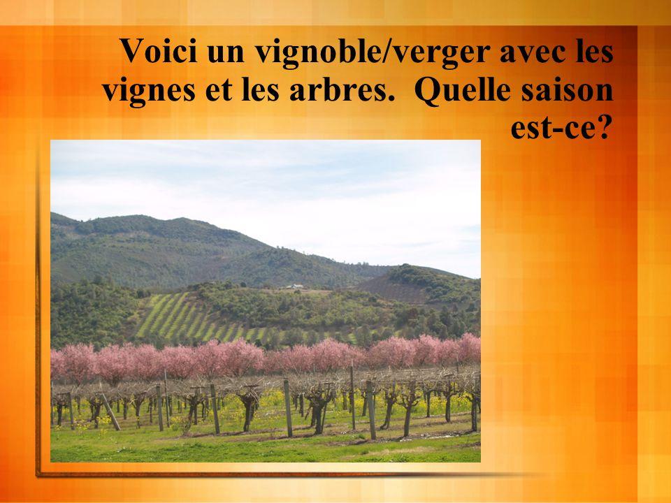 Voici un vignoble/verger avec les vignes et les arbres