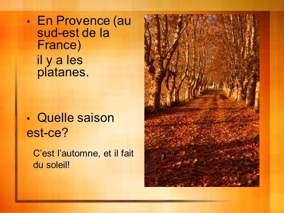 En Provence (au sud-est de la France) il y a les platanes.