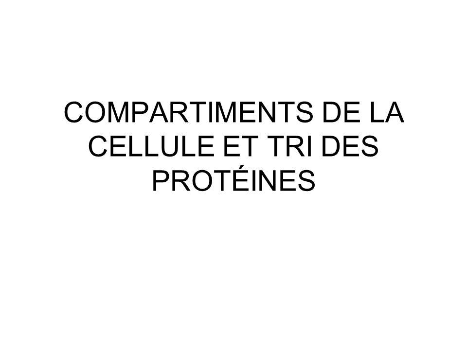 COMPARTIMENTS DE LA CELLULE ET TRI DES PROTÉINES