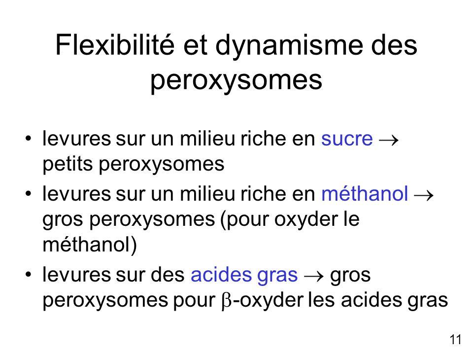 Flexibilité et dynamisme des peroxysomes