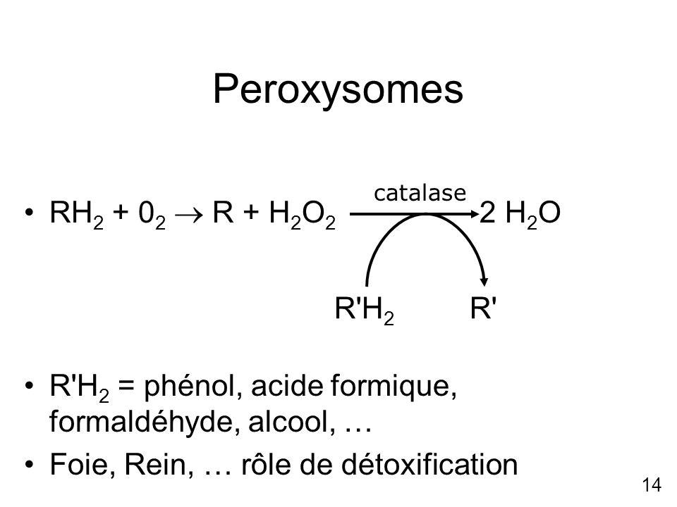 Peroxysomes RH2 + 02  R + H2O2 2 H2O