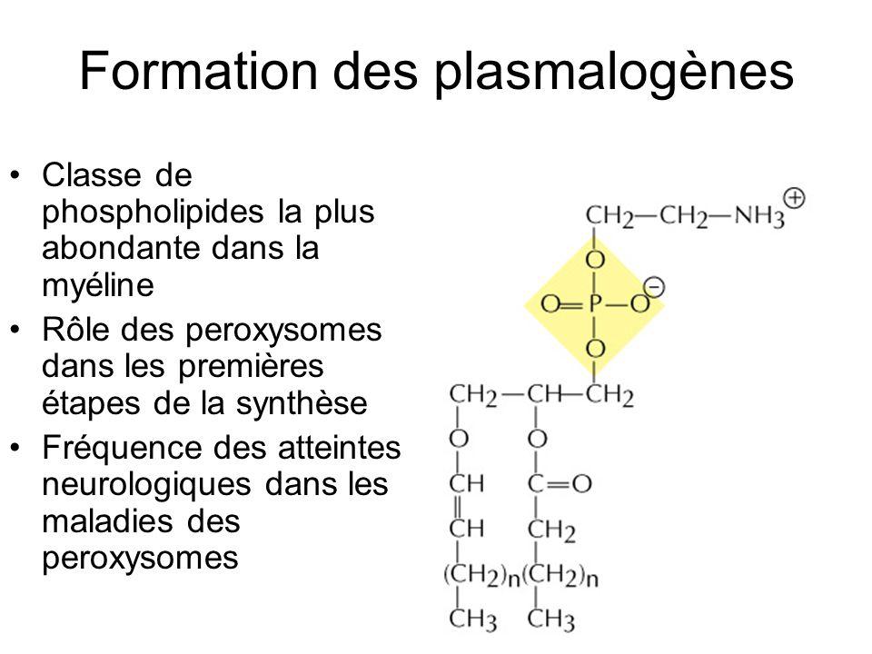 Formation des plasmalogènes