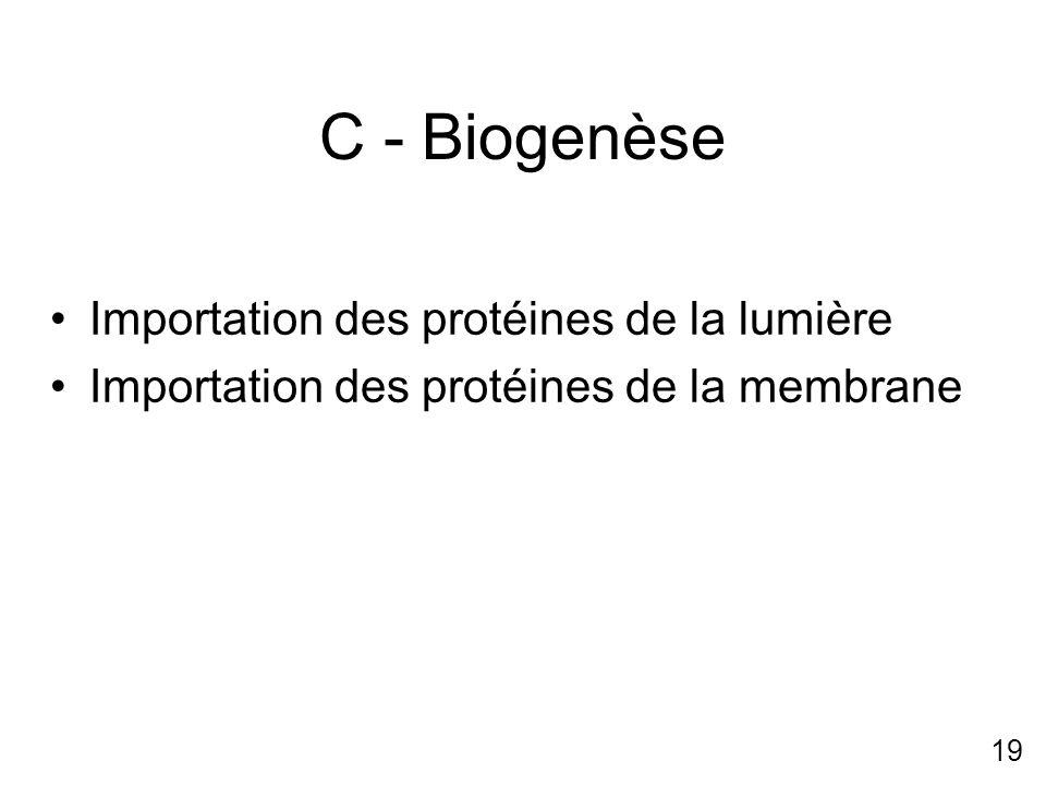 C - Biogenèse Importation des protéines de la lumière