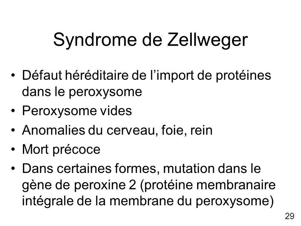 Syndrome de Zellweger Défaut héréditaire de l'import de protéines dans le peroxysome. Peroxysome vides.