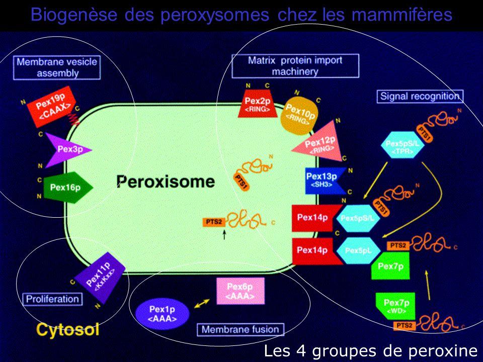 Fujiki,Y2000(Fig1) Biogenèse des peroxysomes chez les mammifères