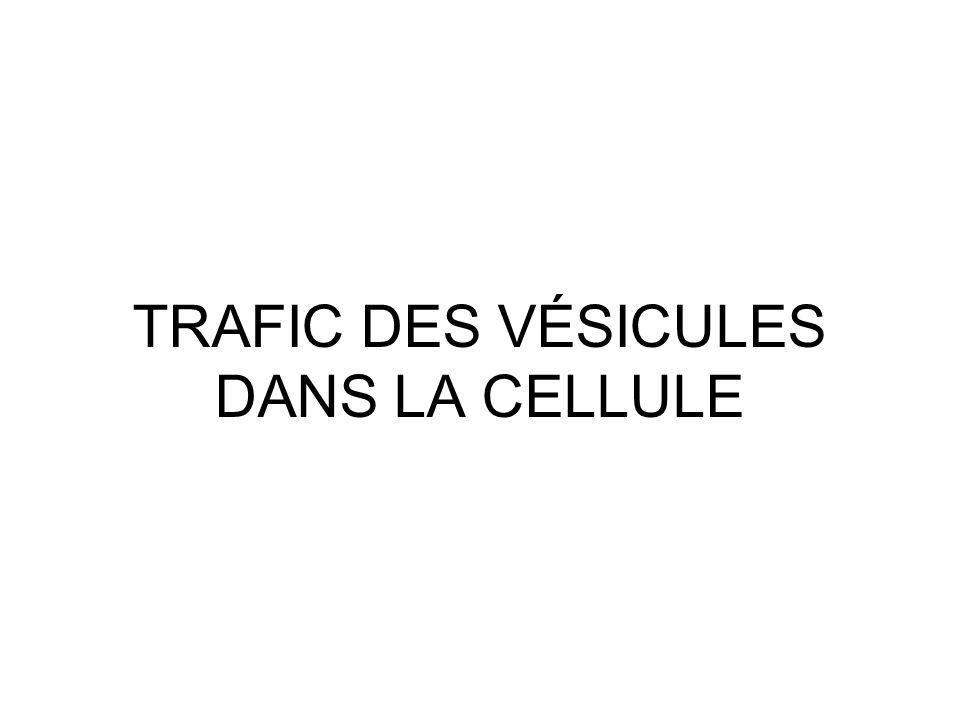 TRAFIC DES VÉSICULES DANS LA CELLULE