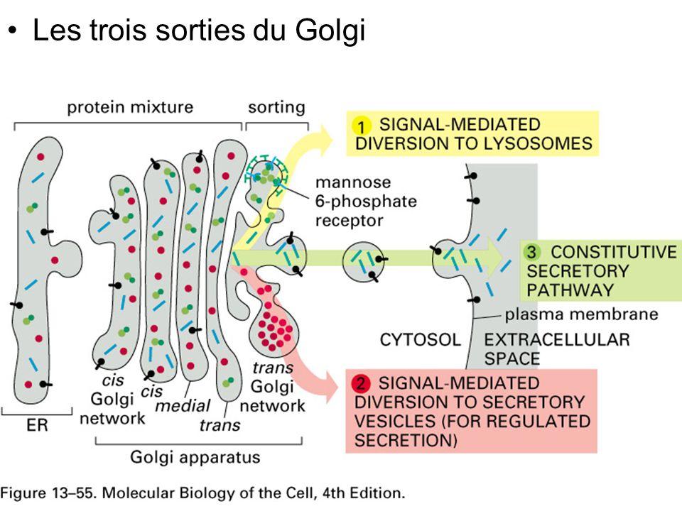 Lundi 15 octobre 2007 Les trois sorties du Golgi Fig 13-55 #1p758