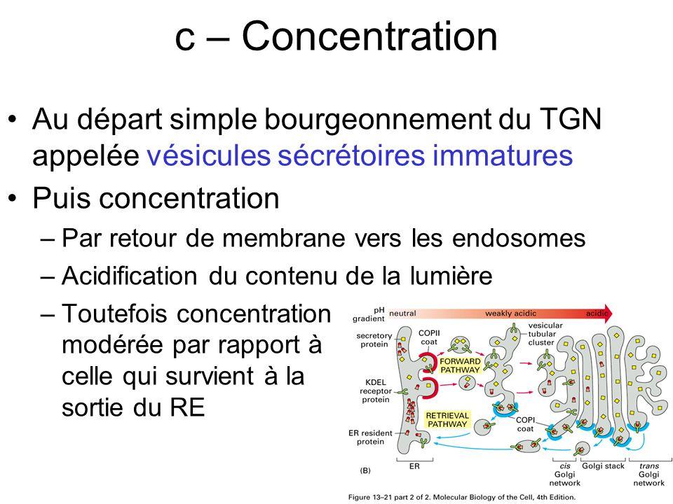 c – Concentration Lundi 15 octobre 2007. Au départ simple bourgeonnement du TGN appelée vésicules sécrétoires immatures.