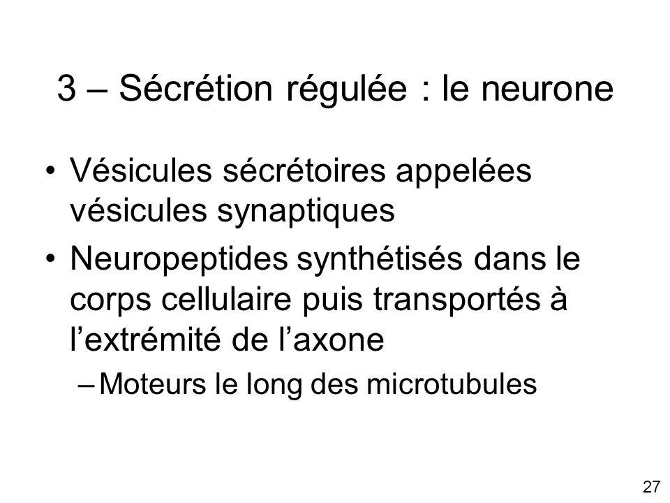 3 – Sécrétion régulée : le neurone