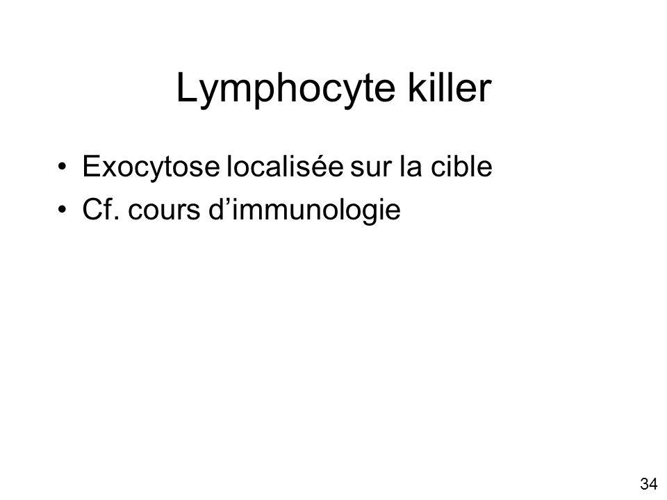 Lymphocyte killer Exocytose localisée sur la cible