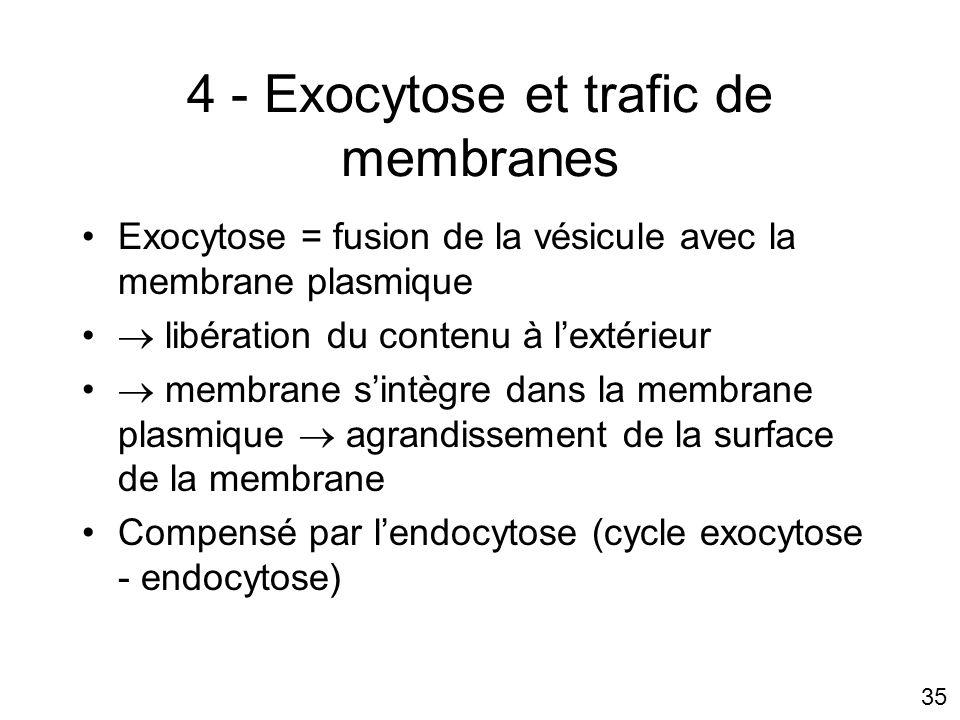 4 - Exocytose et trafic de membranes