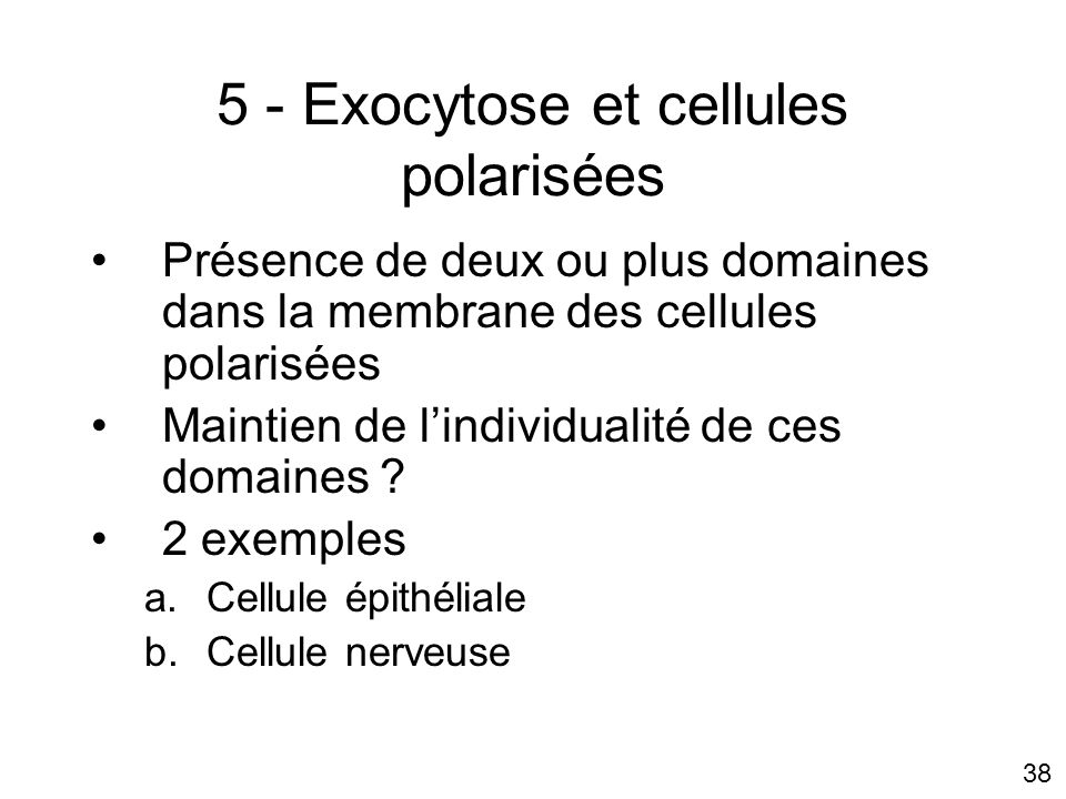 5 - Exocytose et cellules polarisées