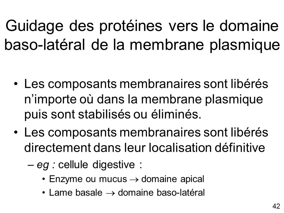Lundi 15 octobre 2007 Guidage des protéines vers le domaine baso-latéral de la membrane plasmique.