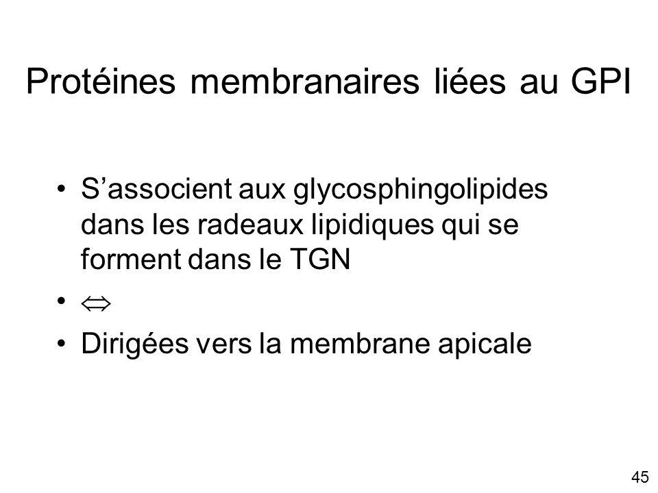 Protéines membranaires liées au GPI