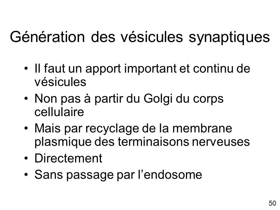 Génération des vésicules synaptiques