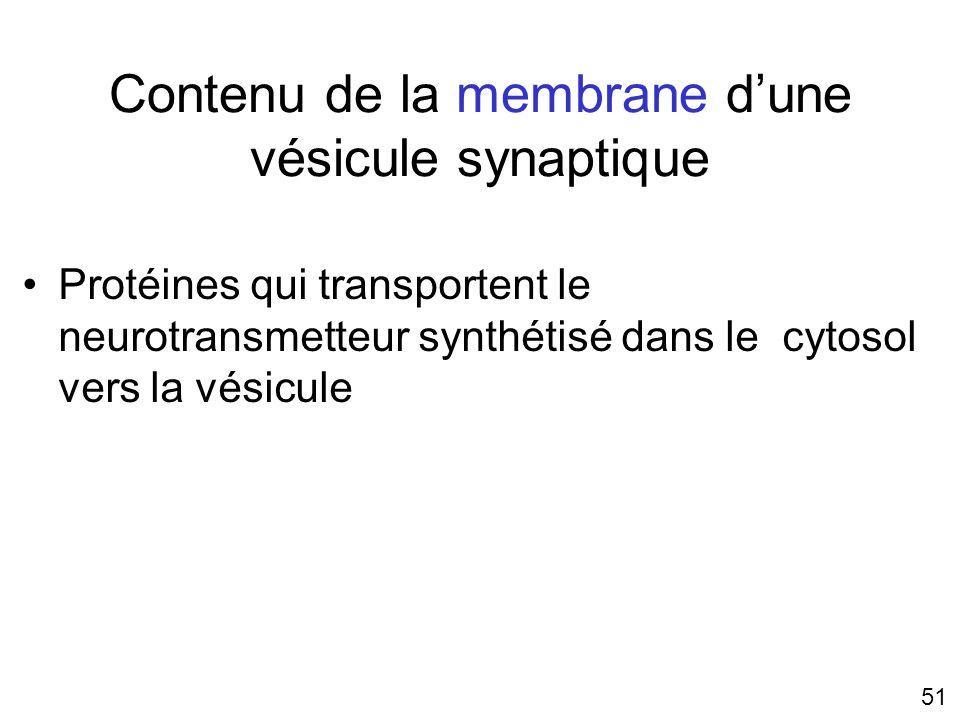 Contenu de la membrane d'une vésicule synaptique