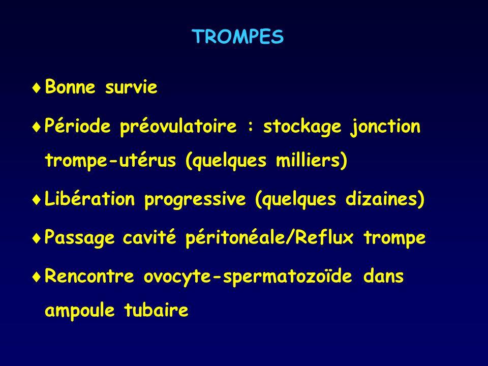 TROMPES Bonne survie. Période préovulatoire : stockage jonction trompe-utérus (quelques milliers) Libération progressive (quelques dizaines)