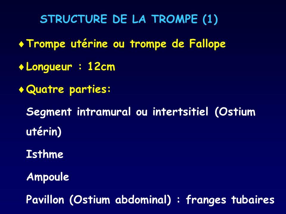 STRUCTURE DE LA TROMPE (1)