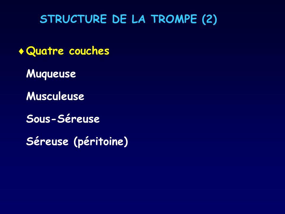 STRUCTURE DE LA TROMPE (2)