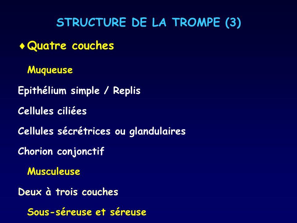 STRUCTURE DE LA TROMPE (3)
