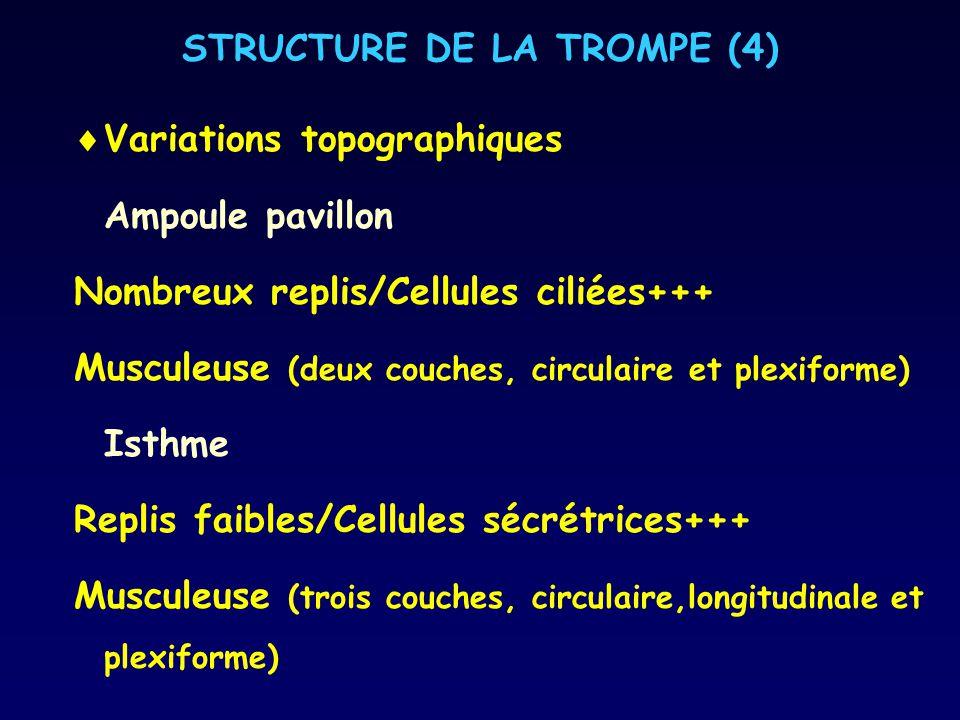 STRUCTURE DE LA TROMPE (4)