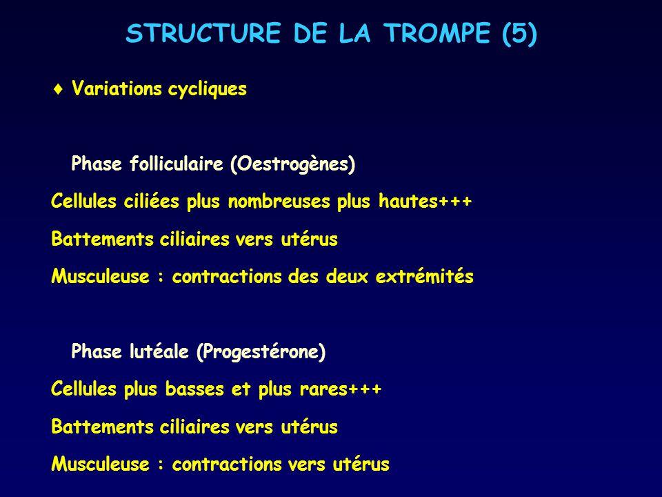 STRUCTURE DE LA TROMPE (5)