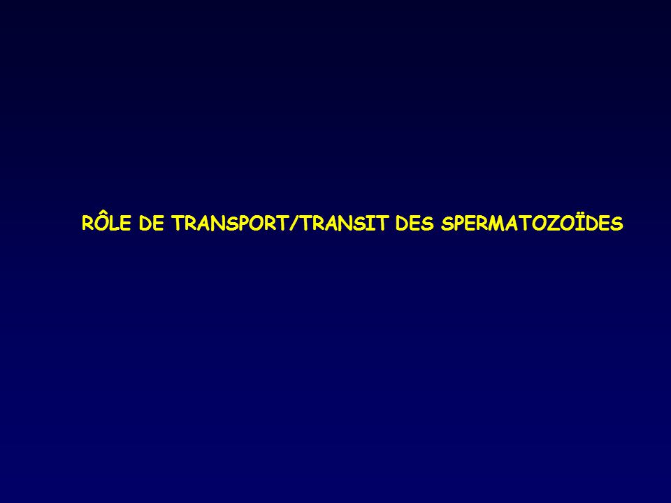 RÔLE DE TRANSPORT/TRANSIT DES SPERMATOZOÏDES