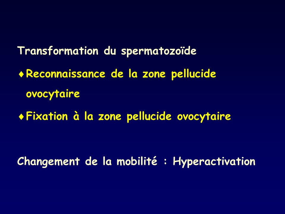 Transformation du spermatozoïde