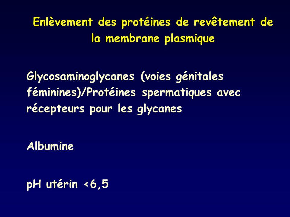Enlèvement des protéines de revêtement de la membrane plasmique