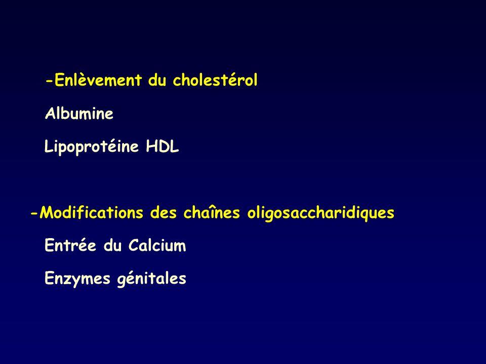 -Enlèvement du cholestérol
