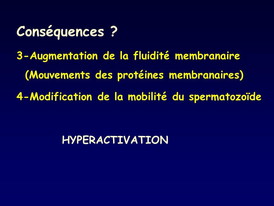 Conséquences 3-Augmentation de la fluidité membranaire (Mouvements des protéines membranaires) 4-Modification de la mobilité du spermatozoïde.