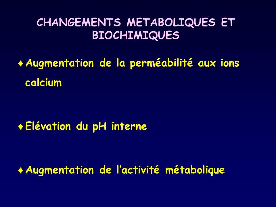 CHANGEMENTS METABOLIQUES ET BIOCHIMIQUES