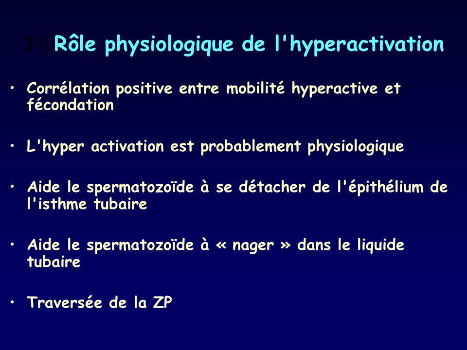 3°) Rôle physiologique de l hyperactivation