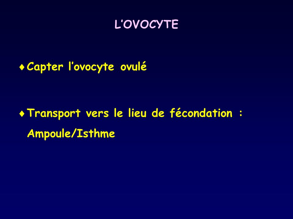 L'OVOCYTE Capter l'ovocyte ovulé Transport vers le lieu de fécondation : Ampoule/Isthme