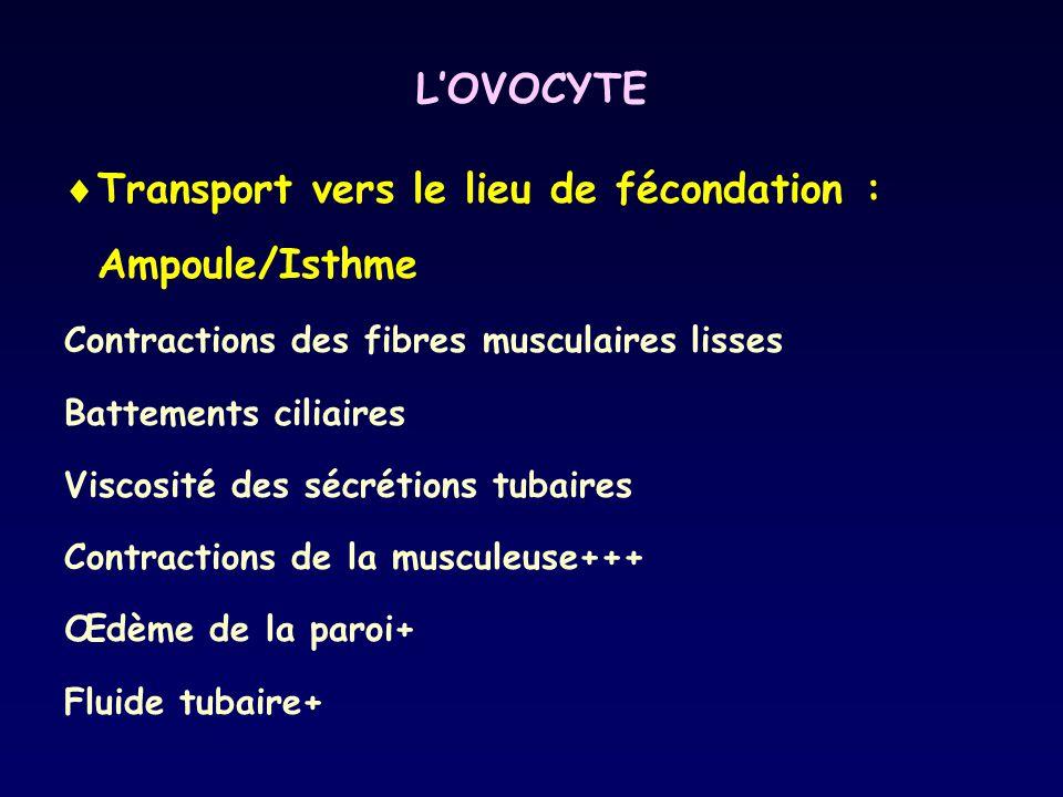 Transport vers le lieu de fécondation : Ampoule/Isthme