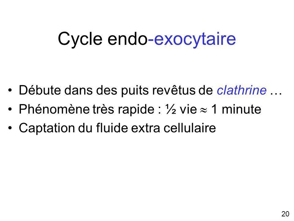 Cycle endo-exocytaire