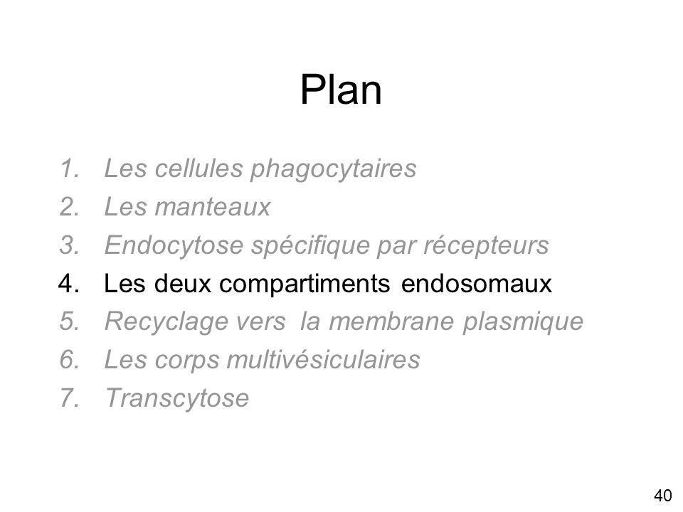 Plan Les cellules phagocytaires Les manteaux