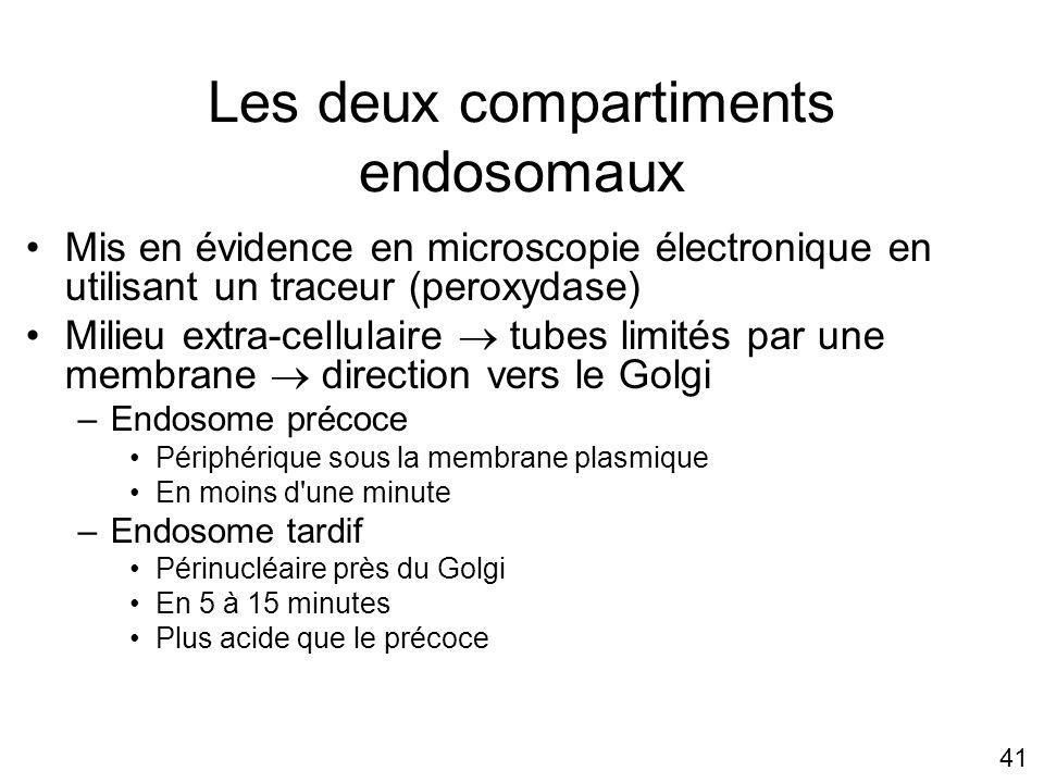 Les deux compartiments endosomaux