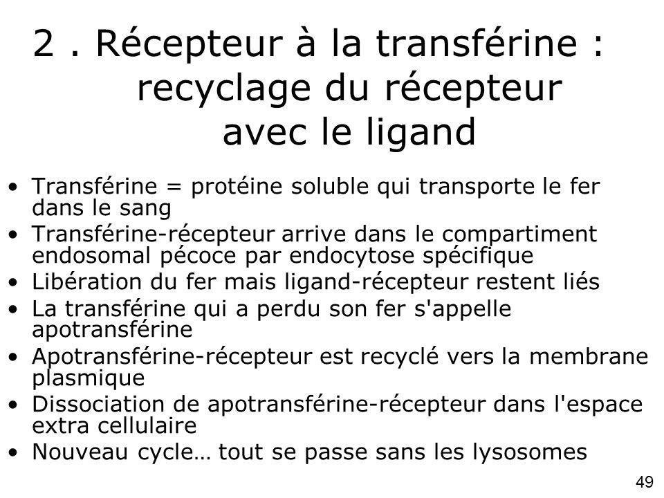 2 . Récepteur à la transférine : recyclage du récepteur avec le ligand