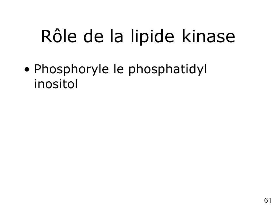 Rôle de la lipide kinase