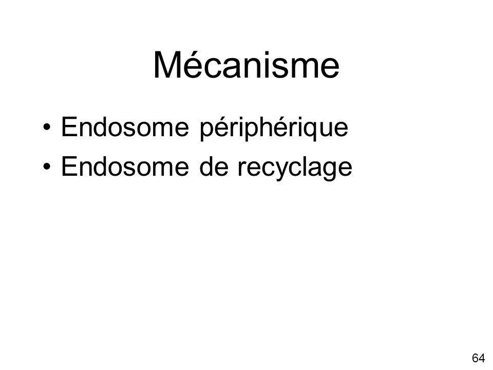 Mécanisme Endosome périphérique Endosome de recyclage