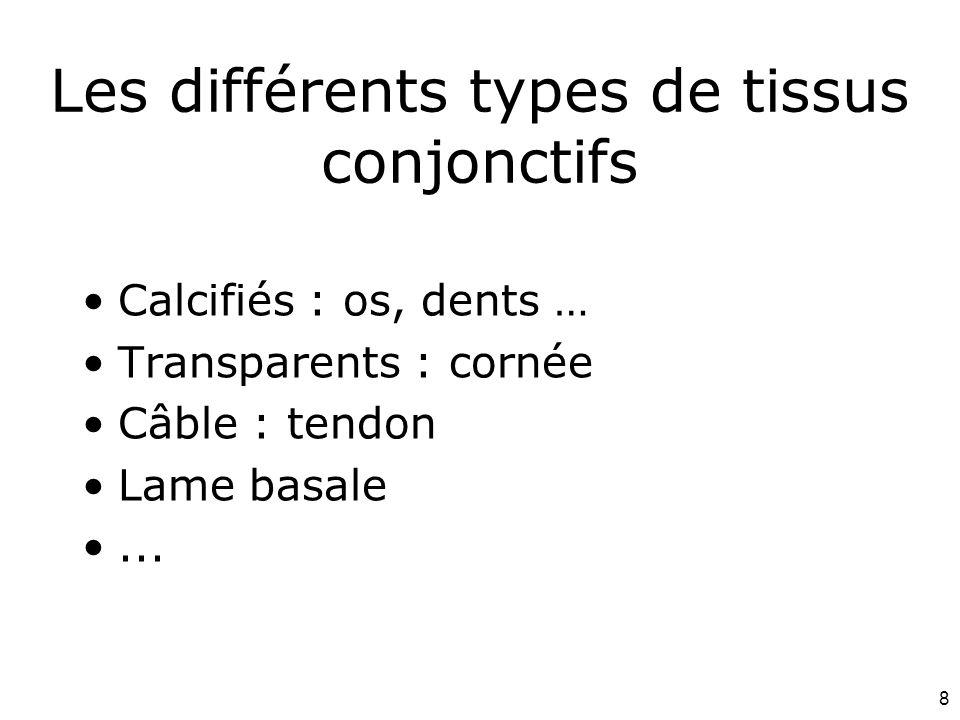 Les différents types de tissus conjonctifs