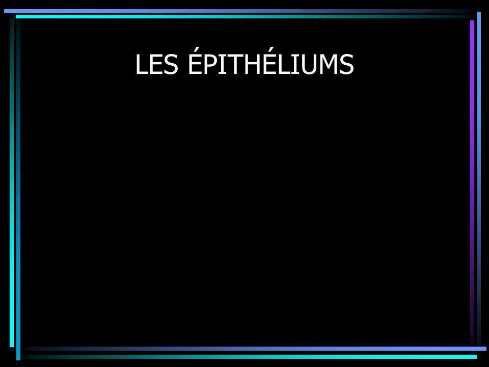 LES ÉPITHÉLIUMS