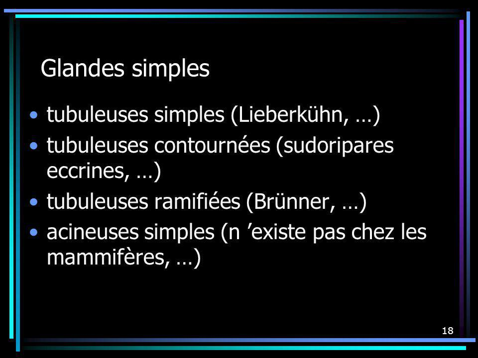 Glandes simples tubuleuses simples (Lieberkühn, …)