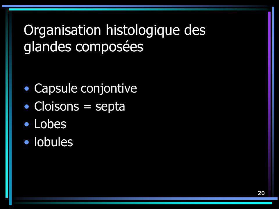Organisation histologique des glandes composées