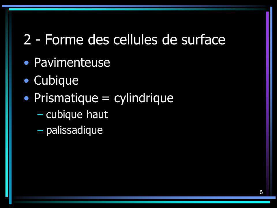 2 - Forme des cellules de surface