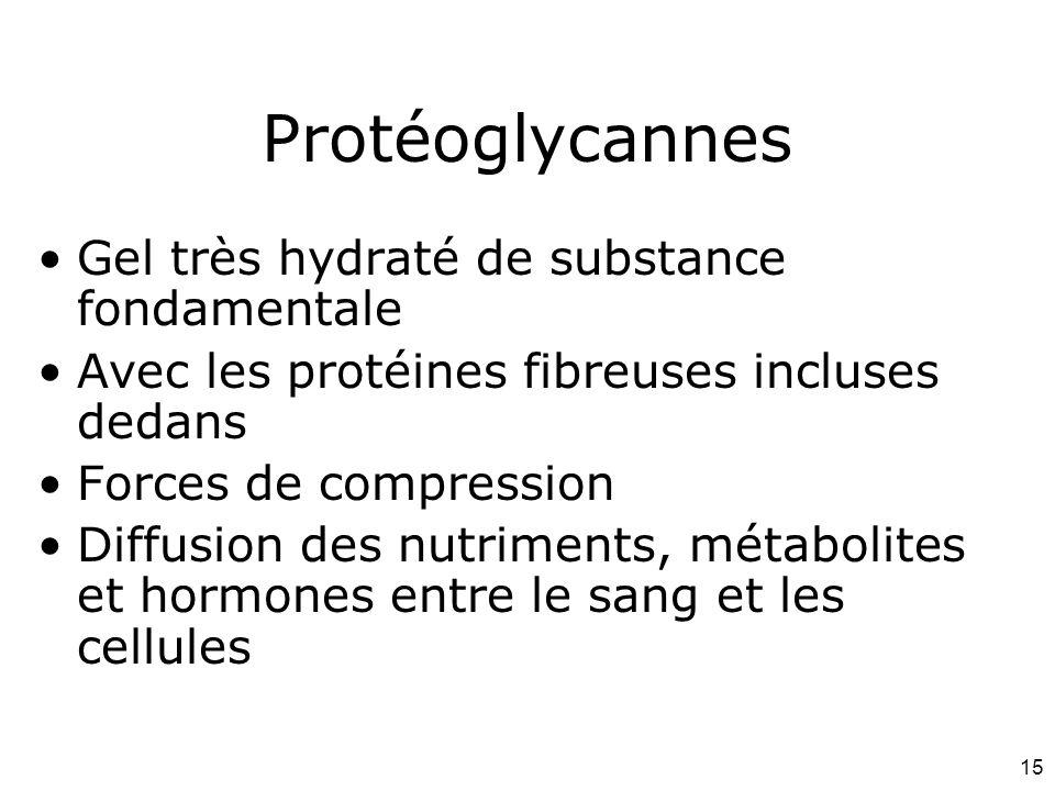 Protéoglycannes Gel très hydraté de substance fondamentale
