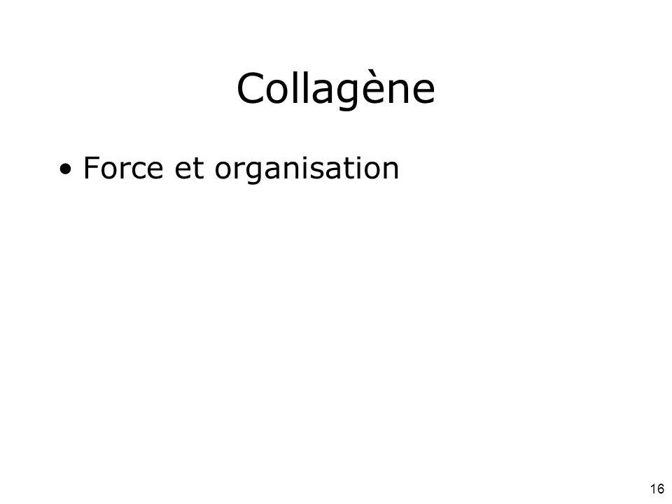 Mardi 12 février 2008 Collagène Force et organisation #1p1091