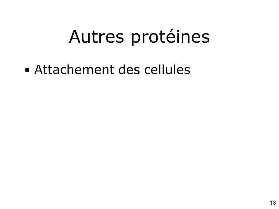 Autres protéines Attachement des cellules #1p1091