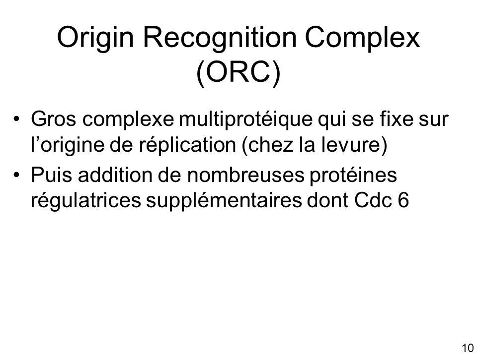 Origin Recognition Complex (ORC)